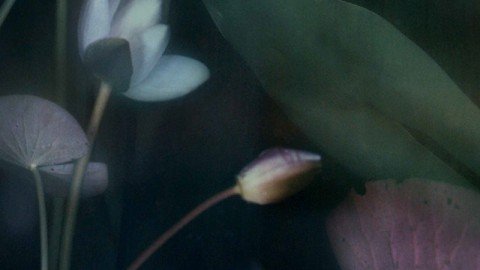 Flore, mon amie