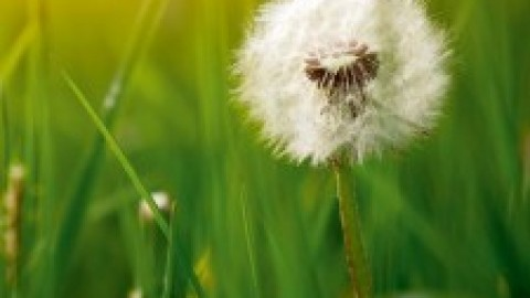 22 mars : 10e Journée française de l'allergie